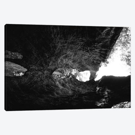 Inside a Redwood Tree Canvas Print #BTY564} by Bethany Young Canvas Art Print