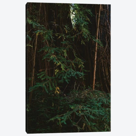 Redwood Forest III Canvas Print #BTY566} by Bethany Young Canvas Art Print