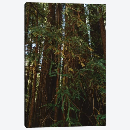 Redwood Forest V Canvas Print #BTY567} by Bethany Young Canvas Print