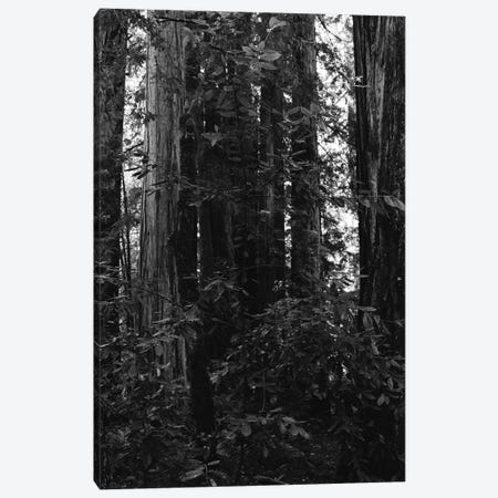 Redwood Forest VII Canvas Print #BTY568} by Bethany Young Canvas Wall Art