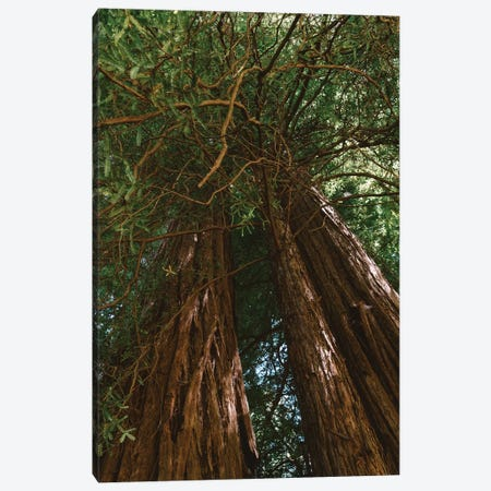 Redwood Forest VIII Canvas Print #BTY569} by Bethany Young Canvas Art