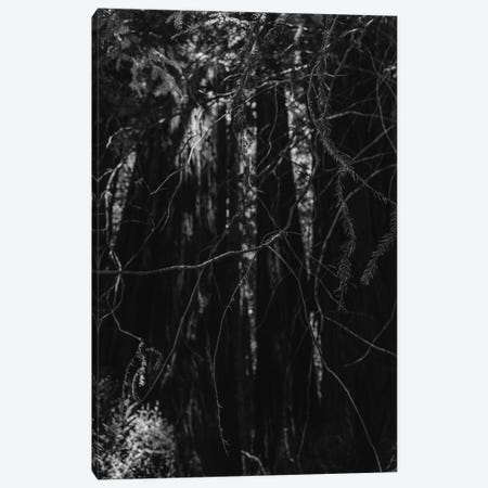 Redwood Forest XIII Canvas Print #BTY571} by Bethany Young Canvas Print