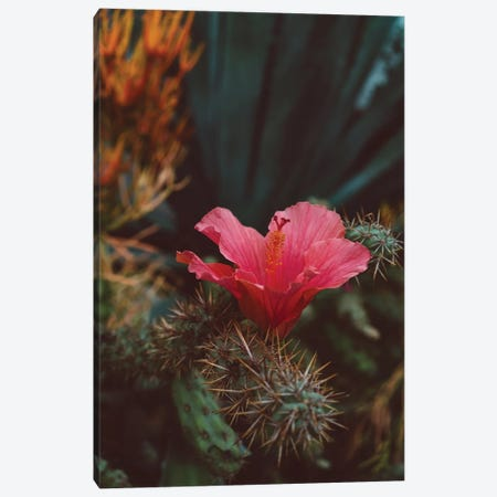 California Bloom II Canvas Print #BTY575} by Bethany Young Canvas Art