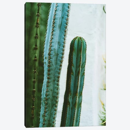 California Cactus Garden II Canvas Print #BTY577} by Bethany Young Canvas Artwork