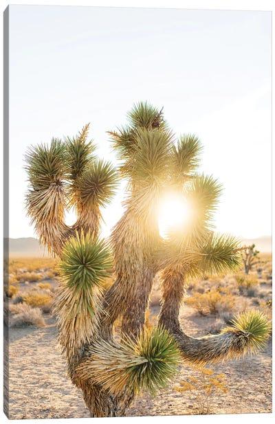 Nevada Desert Sunrise II Canvas Art Print