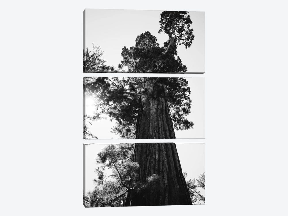 Sequoia National Park IX by Bethany Young 3-piece Art Print