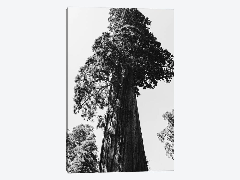 Sequoia National Park VI by Bethany Young 1-piece Canvas Wall Art