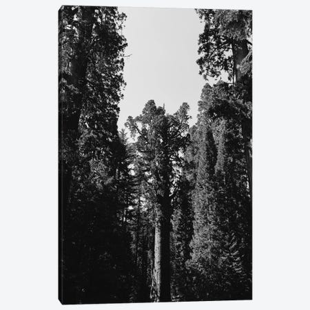 Sequoia National Park XII Canvas Print #BTY614} by Bethany Young Canvas Print