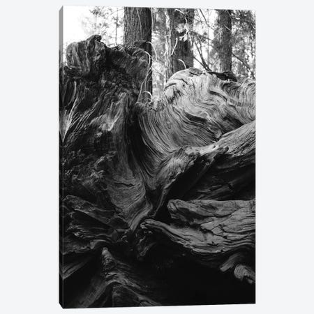Sequoia National Park XIII Canvas Print #BTY615} by Bethany Young Canvas Print