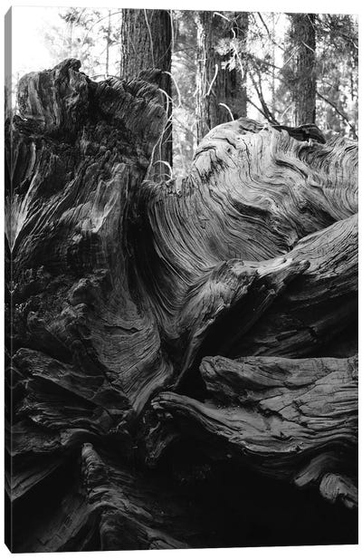 Sequoia National Park XIII Canvas Art Print