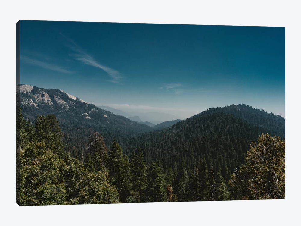 Sequoia National Park by Bethany Young 1-piece Canvas Art