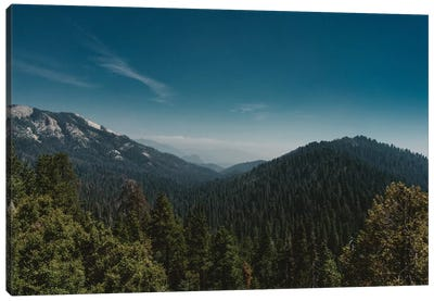 Sequoia National Park Canvas Art Print
