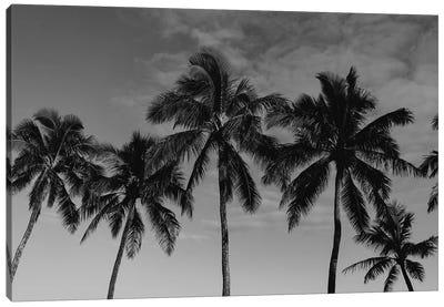 Hawaiian Palms Canvas Art Print
