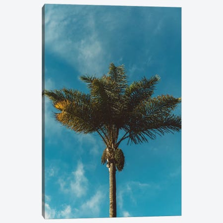 Palm Tree Canvas Print #BTY70} by Bethany Young Art Print
