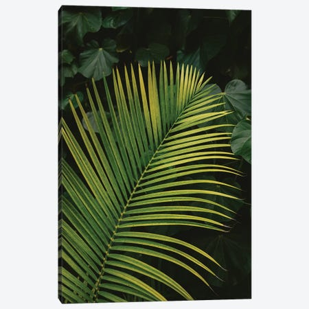 Tropical Hawaii II Canvas Print #BTY731} by Bethany Young Art Print
