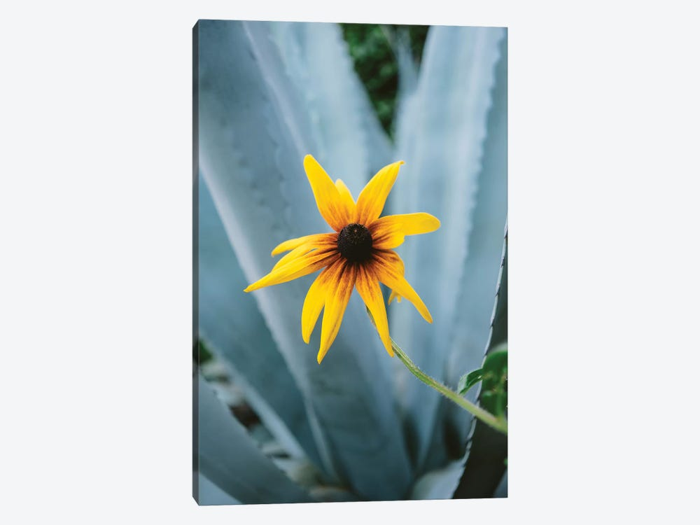 Austin Flower II by Bethany Young 1-piece Canvas Artwork