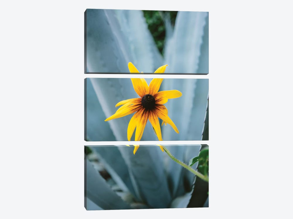Austin Flower II by Bethany Young 3-piece Canvas Art