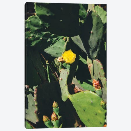 Center Bloom Canvas Print #BTY748} by Bethany Young Canvas Artwork
