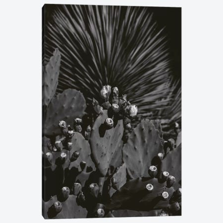 Monochrome Cactus Canvas Print #BTY755} by Bethany Young Canvas Artwork