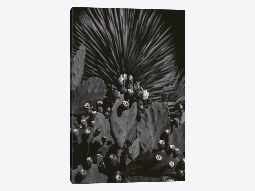 Monochrome Cactus by Bethany Young 1-piece Art Print