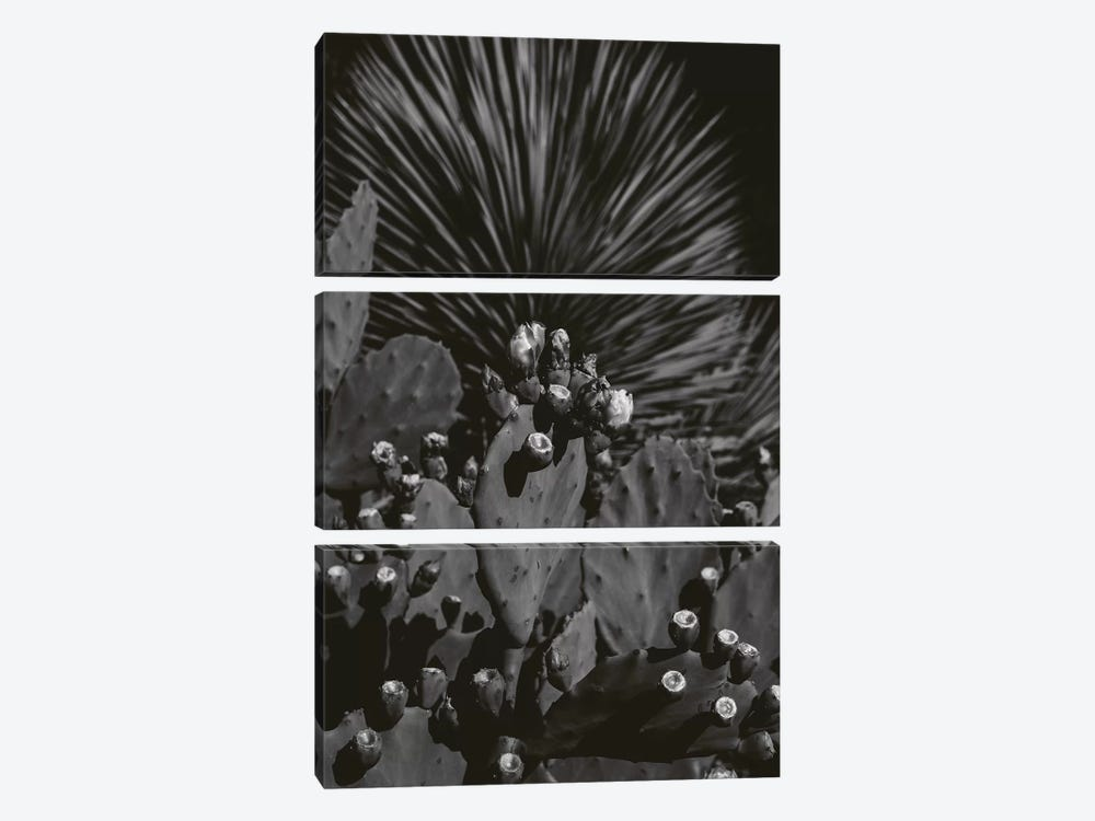 Monochrome Cactus by Bethany Young 3-piece Canvas Art Print