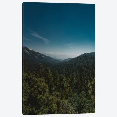 Sequoia National Park XI Canvas Print #BTY83} by Bethany Young Canvas Wall Art