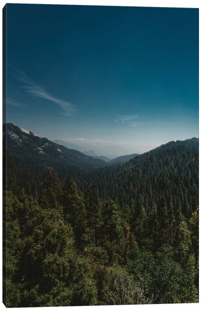 Sequoia National Park XI Canvas Art Print