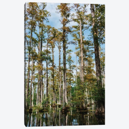Charleston Cypress Gardens II Canvas Print #BTY950} by Bethany Young Art Print