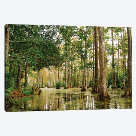 Charleston Cypress Gardens XLI Canvas Print #BTY968} by Bethany Young Canvas Art