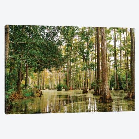 Charleston Cypress Gardens XLI Canvas Print #BTY968} by Bethany Young Canvas Art