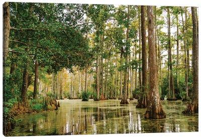 Charleston Cypress Gardens XLI Canvas Art Print