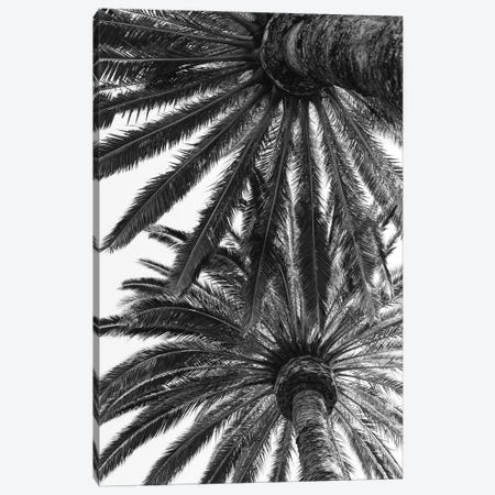 Venice Palms Canvas Print #BTY96} by Bethany Young Canvas Artwork