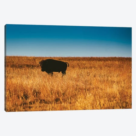 Wild Buffalo Canvas Print #BTY97} by Bethany Young Canvas Art