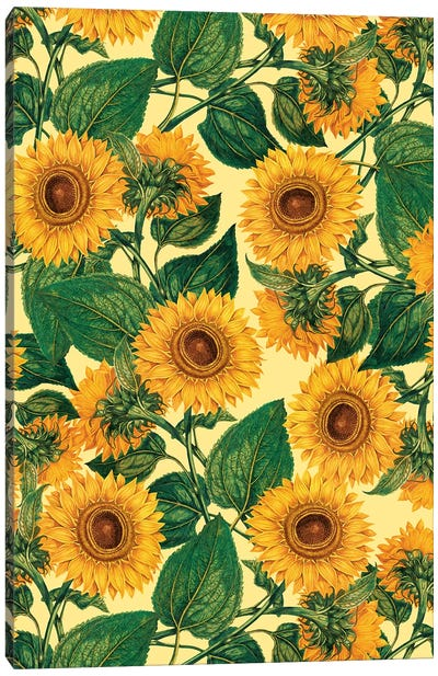 Helianthus Annuus Canvas Art Print