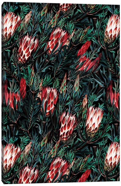 Protea Floral Night Pattern Canvas Art Print