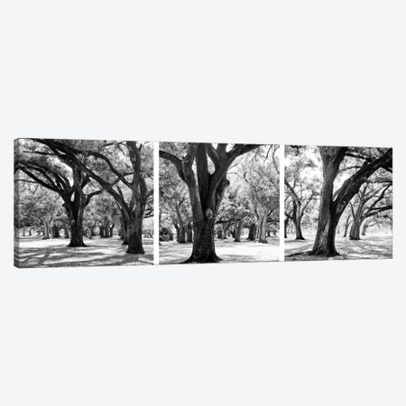 Oak Tree Study Canvas Print #BWA25} by Boyce Watt Art Print