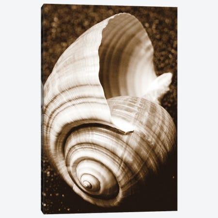 Sea Gallery IV Canvas Print #BWA32} by Boyce Watt Art Print