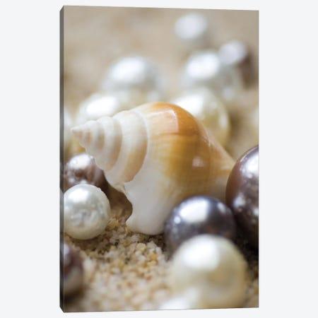 Sea Jewels I Canvas Print #BWA33} by Boyce Watt Canvas Art Print