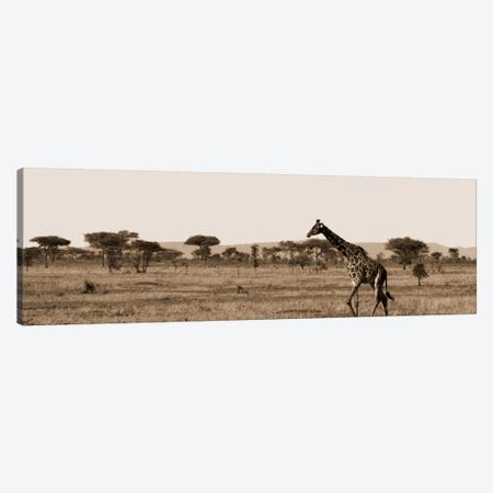 Serengeti Horizons II Canvas Print #BWA36} by Boyce Watt Canvas Art