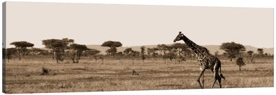 Serengeti Horizons II Canvas Art Print