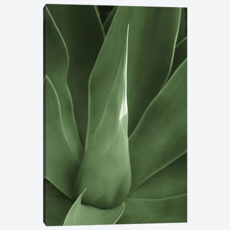 Tropica III Canvas Print #BWA43} by Boyce Watt Canvas Art