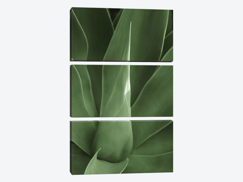 Tropica III by Boyce Watt 3-piece Canvas Wall Art