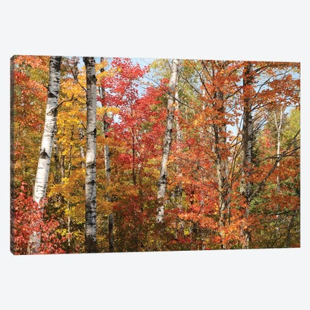 Fall Color Pallette Canvas Print #BWF110} by Brian Wolf Canvas Art