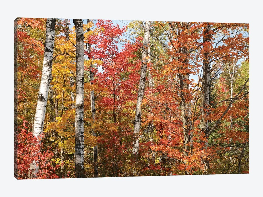 Fall Color Pallette by Brian Wolf 1-piece Canvas Art Print