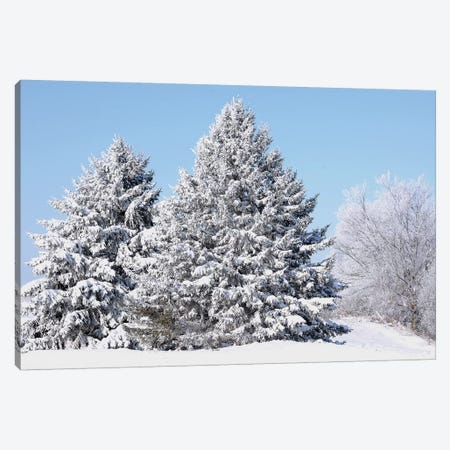 Flocked Trees Canvas Print #BWF120} by Brian Wolf Art Print