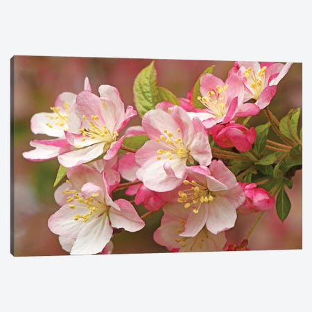 Flowering Crab Canvas Print #BWF121} by Brian Wolf Art Print