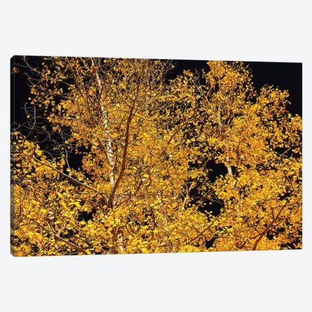 Aspen Contras Canvas Print #BWF12} by Brian Wolf Canvas Artwork