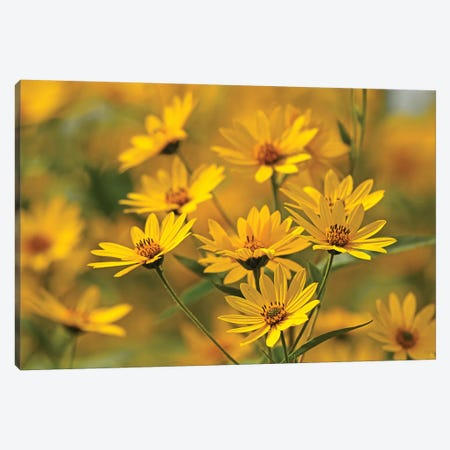 Gold Flowers Canvas Print #BWF144} by Brian Wolf Canvas Art