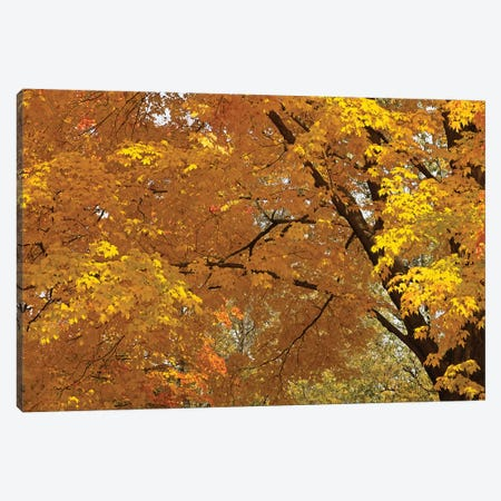 Golden Canopy Canvas Print #BWF145} by Brian Wolf Canvas Art