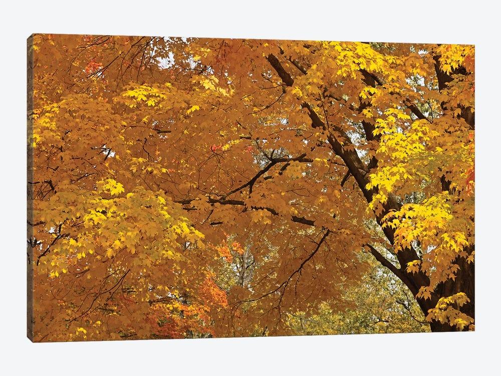 Golden Canopy by Brian Wolf 1-piece Art Print